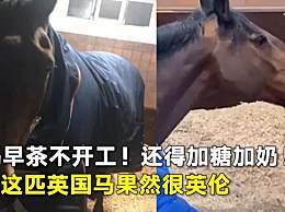 马不喝奶茶不开工 爱茶如命的马你见过吗?