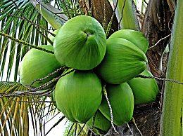 椰子能放多久