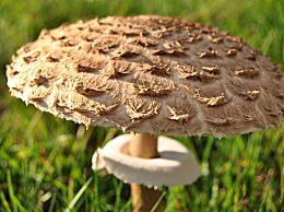 神奇蘑菇缓解抑郁 缓解抑郁症的十个方法
