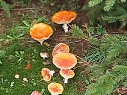 神奇蘑菇可缓解抑郁症 为全球患者带来希望