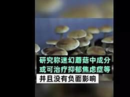神奇蘑菇缓解抑郁 未来抑郁症可能能治愈?