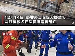 两搜救犬疑被毒死 曾多次协助救援队执行搜救任务