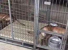 两搜救犬疑被毒死 两搜救犬被毒害事件怎么回事