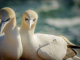 候鸟式养老是什么意思 详说候鸟式养老的好处和弊端