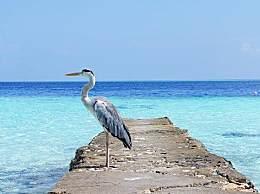 白鹭之乡的防城港开白鹭去哪儿看?鹭鸟的种类一览