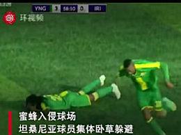 足球比赛遭蜜蜂入侵 多名球员离奇倒地