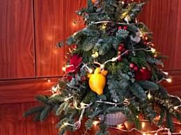 圣诞节为什么要有圣诞树 圣诞树是怎么来的