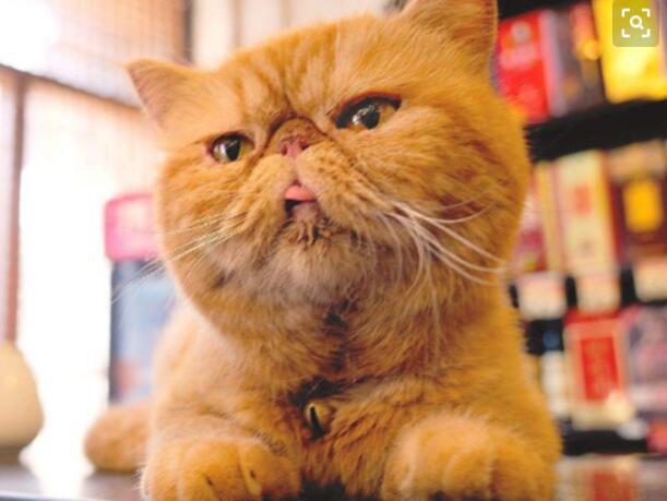 加菲猫漫画手稿被拍卖 这么可爱的小猫你喜欢吗