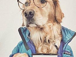 狗界高考毕业生 帮助患者减轻精神心理压力