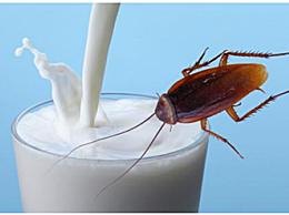 蟑螂奶成食物新品种 这样的黑暗料理你想尝尝吗
