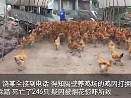 邻居50岁大寿放烟花 246只土鸡被吓死