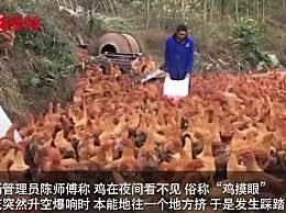 246只土鸡被吓死怎么回事?燃放烟花活活被吓死活久见