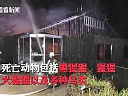 德国动物园跨年夜失火 火灾原因疑有人放天灯