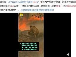 8000只考拉丧生山火 4.8亿哺乳动物鸟类和爬行动物丧生