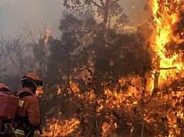 8000只考拉丧生山火 澳山火受灾地区大量动物死亡