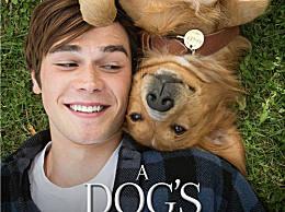 好看的狗狗电影有哪些?狗狗暖心电影十大排行
