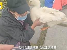 宠物鸭丢后痛哭登寻鸭启事 本来打算吃掉的?