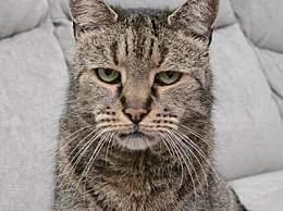 世界上年龄最大的猫 相当于人类144岁