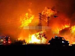 澳山火烟雾蔓延至南美 超2万只考拉山火中死亡让人心痛