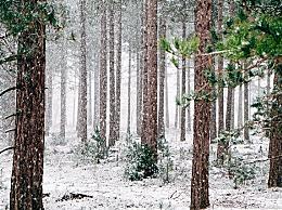 大寒节气是几九?三九天冷还是大寒冷?