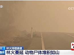 有害烟雾笼罩半个地球 澳大利亚山火最新情况
