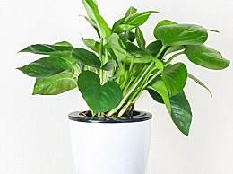 办公室放什么植物好 适合办公室养的植物有哪些?