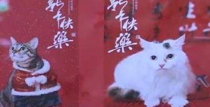 宠物摄影师成新宠 铲屎官愿为爱犬花上万元