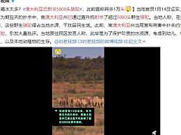 澳大利亚已射杀5000头骆驼 只因骆驼喝水太多