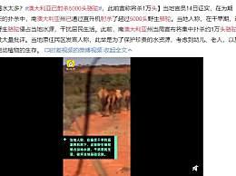 澳大利亚已射杀5000头骆驼 骆驼无辜死亡太可怜