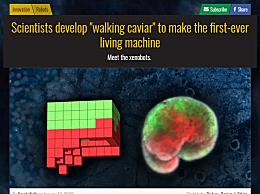 首个活体机器人诞生 即是活的生物又是可被编程的机器