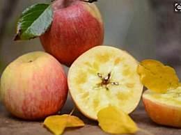 糖心苹果冰糖心是怎么形成的?糖心苹果好吃吗