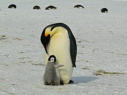 南极五年共有1.5万亿吨冰融化 气候问题正在威胁动物的生存