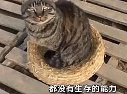 女大学生毕业后收养100多只流浪猫 给每一只猫咪一个遮风挡雨的家