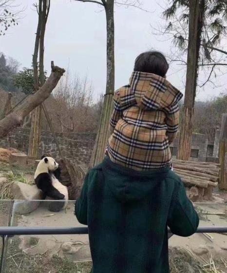 黄晓明带儿子逛动物园不见baby 两人离婚了?