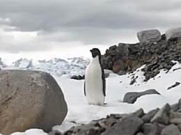 南极五年1.5亿冰川融化 全球气候变暖情况如何?