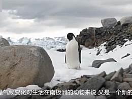 南极五年1.5万亿吨冰融化 南极企鹅面临危机