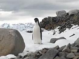 南极五年1.5万亿吨冰融化 南极面临生物灭绝风险