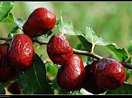 多吃阿胶枣强身健体 常吃阿胶枣有哪些好处和作用