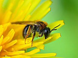 孕妇可以喝蜂蜜吗 孕妇食用蜂蜜的好处坏处