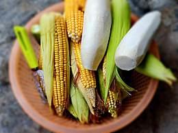 黏玉米怎么煮 黏玉米煮几分钟能熟 方法介绍