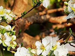 立春有哪些气候特点?立春节气标示着进入了春季
