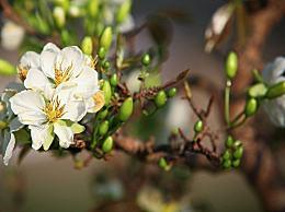 立春咬春是什么意思?立春的5个习俗介绍