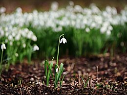 立春是怎么来的?立春的由来以及传说介绍