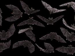 蝙蝠能传染什么病