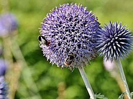 春天怎么预防花粉过敏?春季预防花粉过敏的10种方法