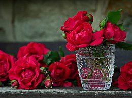 情人节送什么颜色的玫瑰花?不同颜色玫瑰花花语及寓意