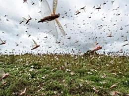 联合国呼吁关注蝗灾 受影响国家有1300万人严重缺乏粮食保障