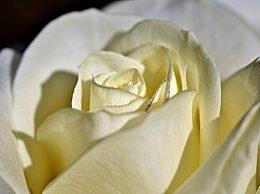 今年情人节送什么花给老婆?来看看不同花束的花语介绍