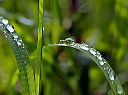 2020年雨水是几九?雨水节气的风俗活动介绍