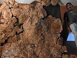 南美现史上最大龟壳 属于已灭绝的地纹骇龟